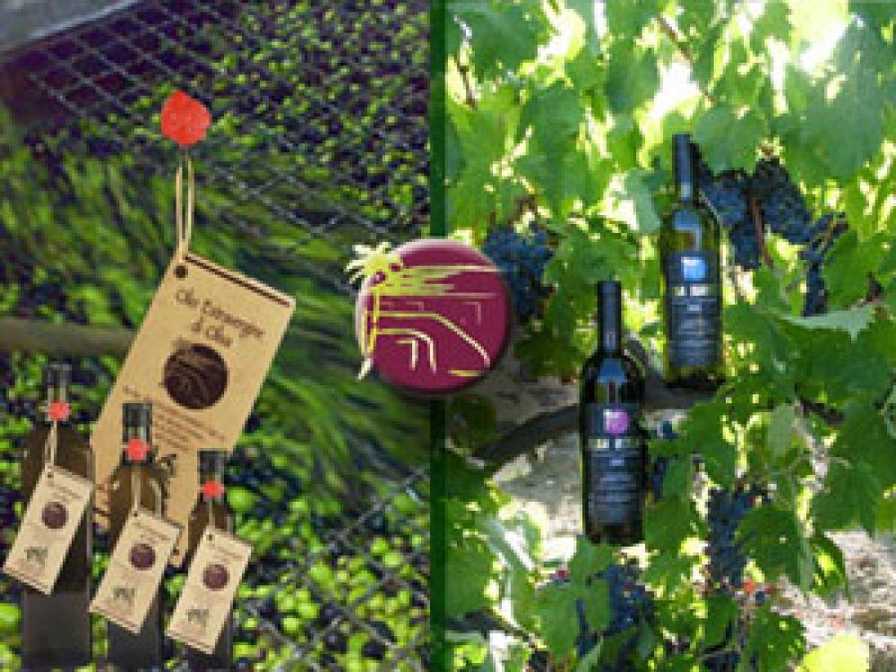 I vini DOC e l'aleatico passito della Cantina Mazzarri